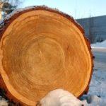 почему древесина